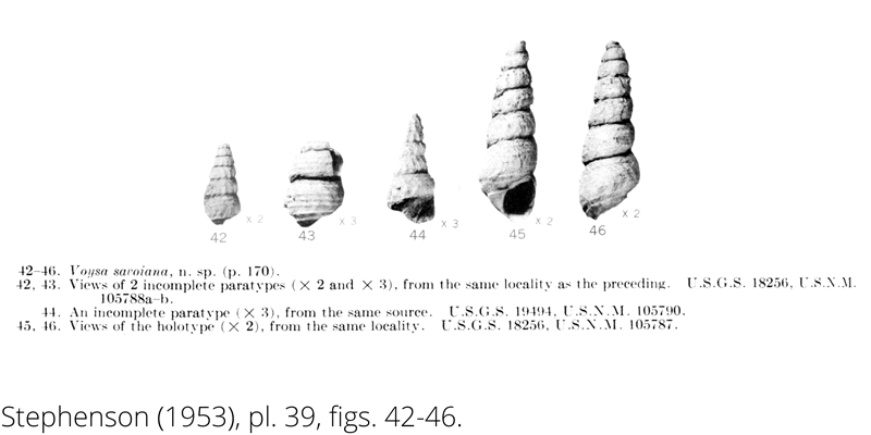 <i> Voysa savoiana </i> from the Cenomanian Woodbine Fm. of Texas (Stephenson 1953).