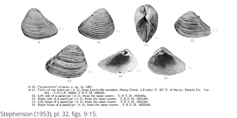 <i> Caryocorbula ovisana </i> from the Cenomanian Woodbine Fm. of Texas (Stephenson 1953).