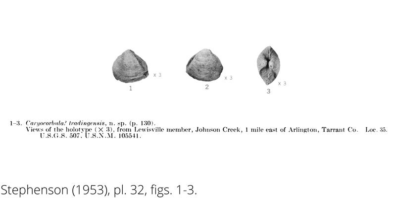<i> Caryocorbula tradingensis </i> from the Cenomanian Woodbine Fm. of Texas (Stephenson 1953).