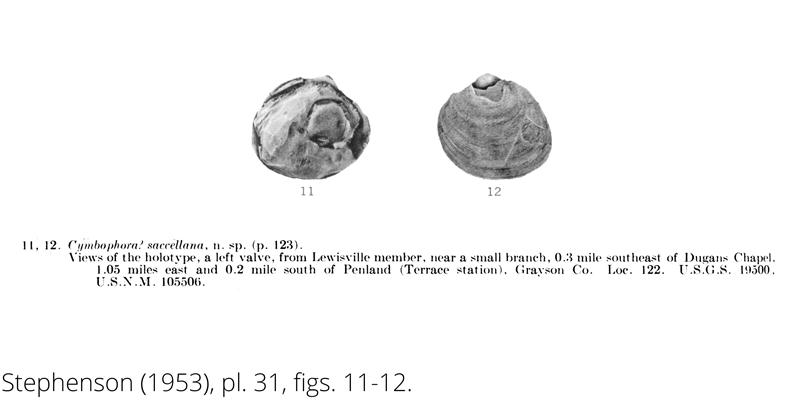 <i> Cymbophora saccellana </i> from the Cenomanian Woodbine Fm. of Texas (Stephenson 1953).