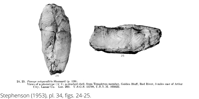 <i> Panope subparallela </i> from the Cenomanian Woodbine Fm. of Texas (Stephenson 1953).