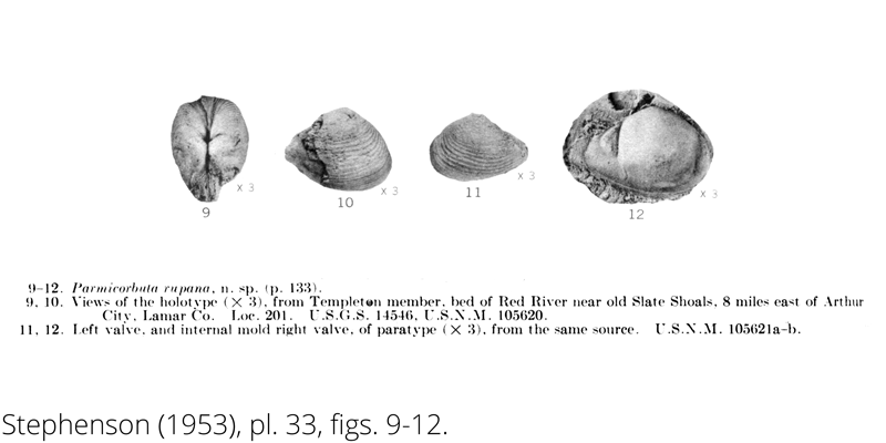 <i> Parmicorbula rupana </i> from the Cenomanian Woodbine Fm. of Texas (Stephenson 1953).
