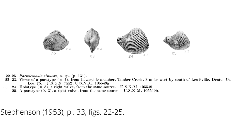 <i> Parmicorbula sinuosa </i> from the Cenomanian Woodbine Fm. of Texas (Stephenson 1953).