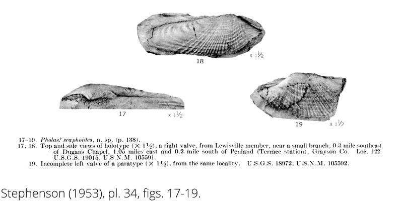 <i> Pholas scaphoides </i> from the Cenomanian Woodbine Fm. of Texas (Stephenson 1953).