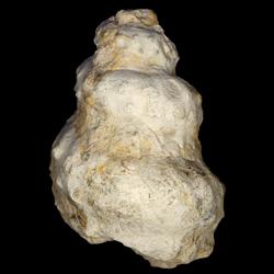 Turrilites brazoensis