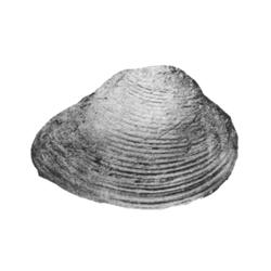 Ursirivus arlingtonanus