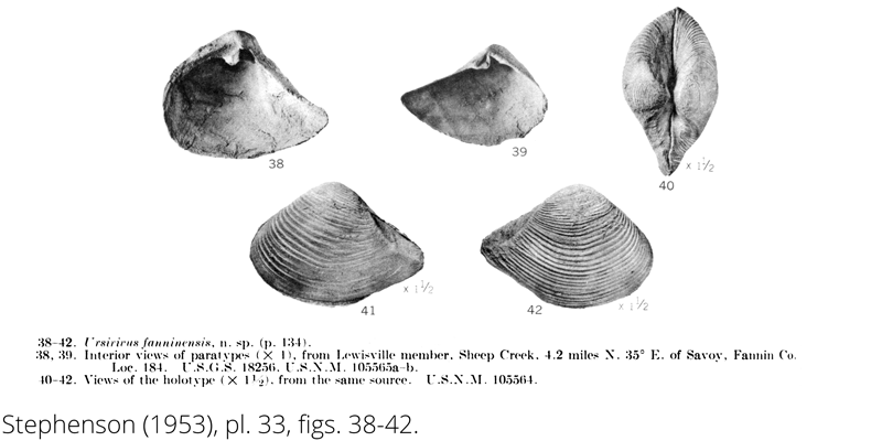 <i> Ursirivus fanninensis </i> from the Cenomanian Woodbine Fm. of Texas (Stephenson 1953).