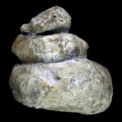 Hypoturrilites tuberculatus