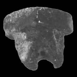 Rhombodus levis