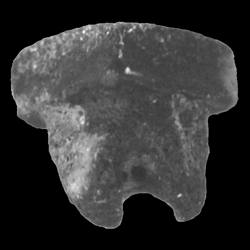 Rhombodontidae